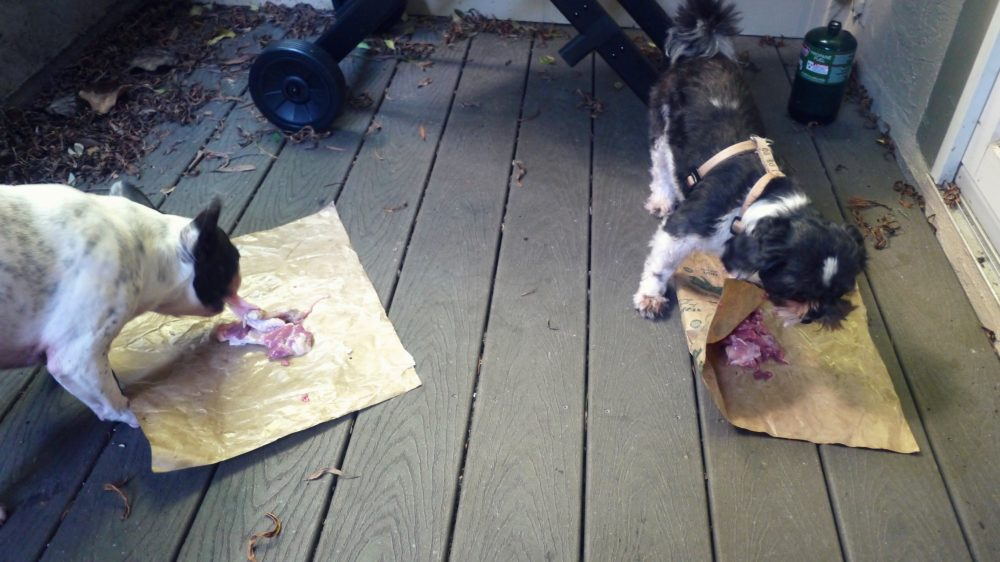 Benefits of Raw Food for Dogs