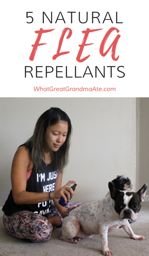 5 NATURAL FLEA REPELLANTS