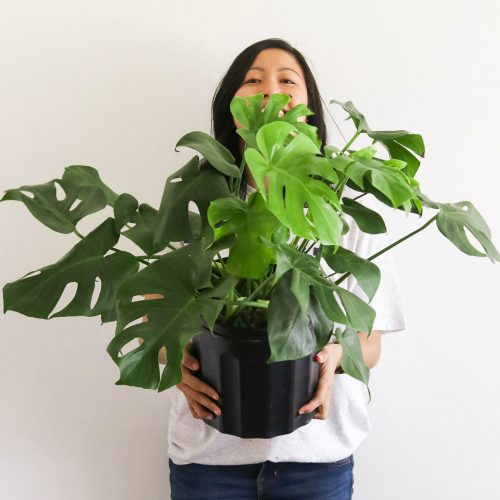 How to Take Care of Houseplants + Their Benefits